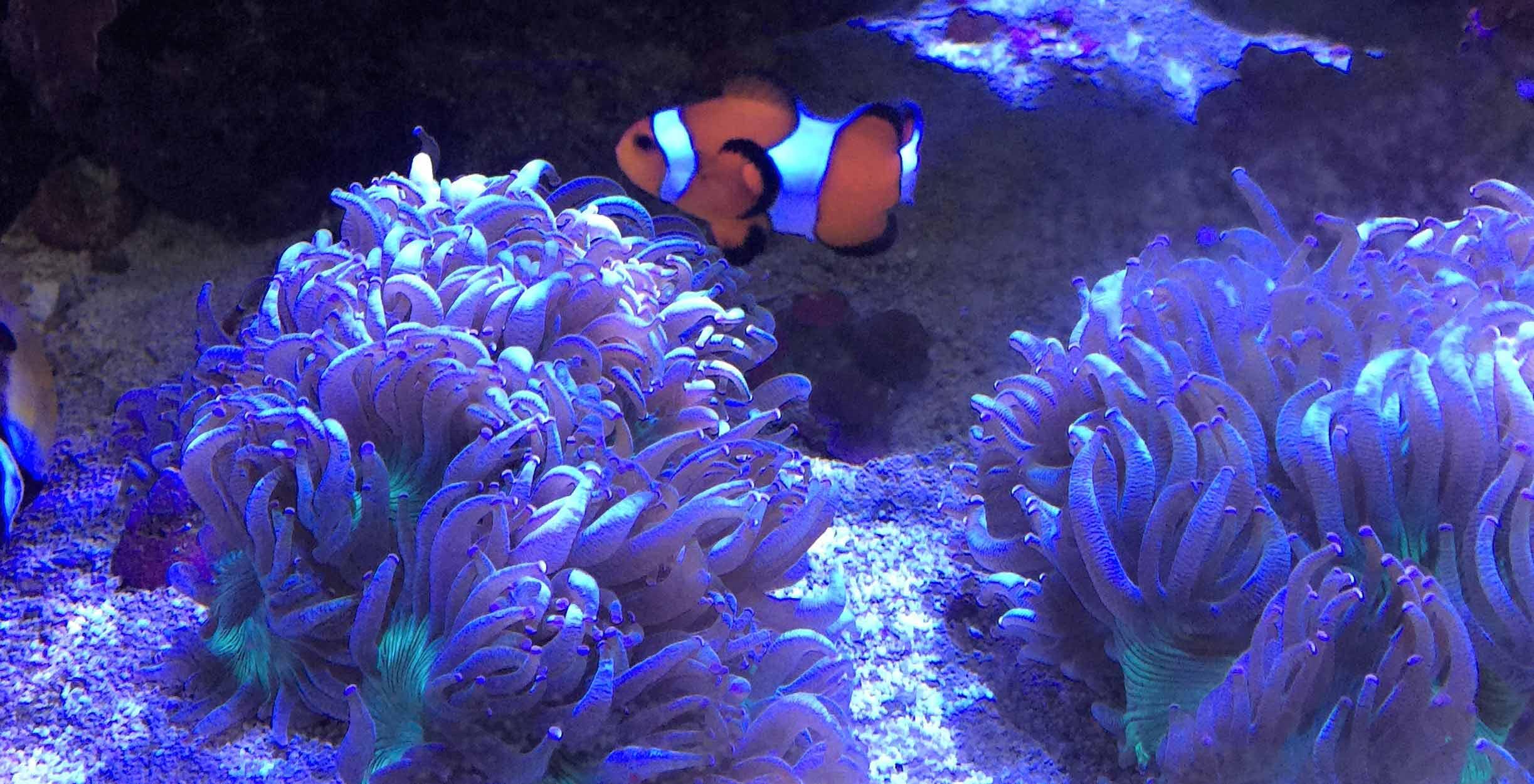 Saltwater Fish, Coral & Invertebrates - Aquarium Adventure